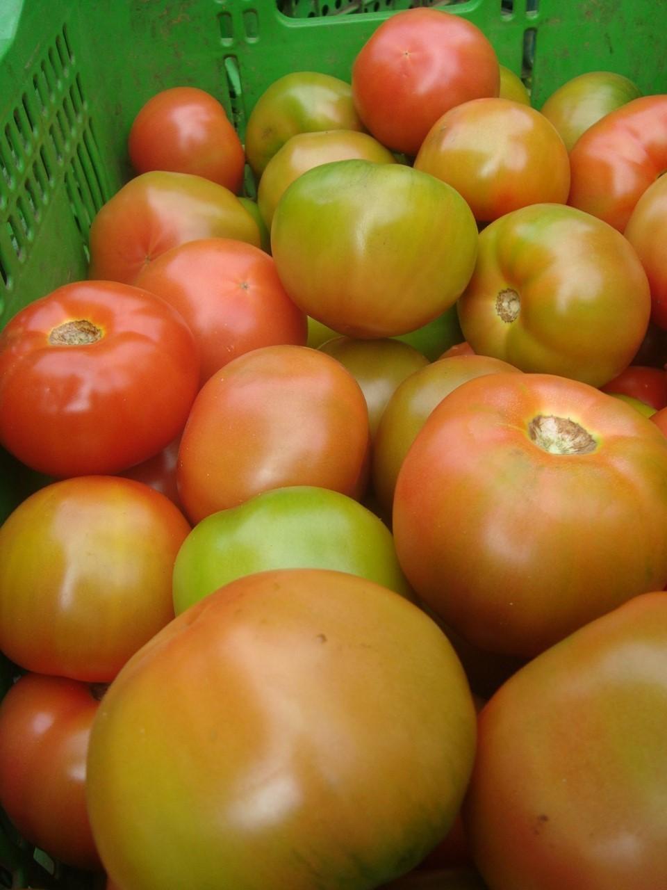 Preço do tomate tem aumento de 225% na Ceasa/ES